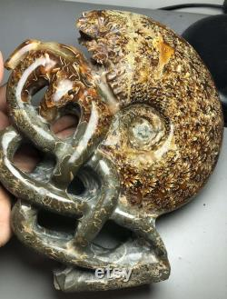1502g Madagascar Rare Split Ammonite Fossil Specimen Shell Healing
