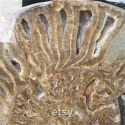 5.52LB Natural Rare Ammonite Fossil Conch,Quartz Crystal Fossil,Fossil Specimen,Home Decoration,Crystal Heal,From Madagascar Stand