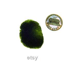 Certified Glossy Big Moldavite