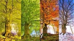 Deep Red Lodalite Four Seasons Scenic Garden Quartz Meditation Companion Gem of the Four Seasons