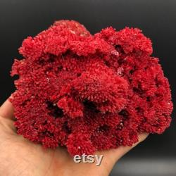 Red Coral ,100 Natural beautiful Rare Red Coral Branches Minerals Specimen A1376